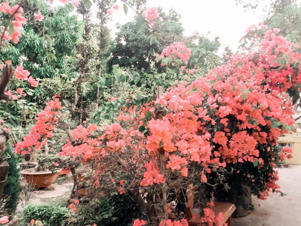 Ở đây, đến một giai điệu cất lên cũng thật đáng yêu, hóa ra nếu mang tâm trạng hoan ca, bỗng dưng vạn vật sẽ nở hoa.